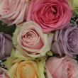 Bridal roses in soft colors — Stok fotoğraf
