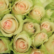 Stock Photo: Pale pink roses in a wedding arrangement