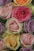 Bridal roses in soft colors — Stock Photo