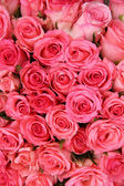 Gruppo di rose rosa — Foto Stock