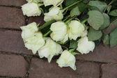 Mourning roses — Stock Photo