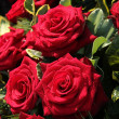 Wet red roses — Stock Photo