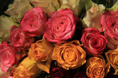 Roses in a floral arrangement — Stock Photo