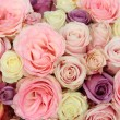 Wedding roses in pastel colors — Photo