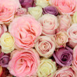 Wedding roses in pastel colors — Stock Photo