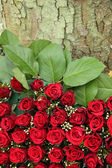 Red rose flower arrangement — Stock Photo