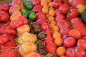 Tomatoes in various colors — Stock Photo