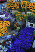 Flowers at a Provencal market — Stock Photo