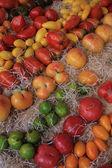 Tomater — Stockfoto