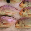 Gilt-head bream — Stock Photo