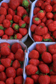 Strawberries in boxes — Stock Photo
