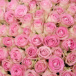 Pink roses in a group — Stockfoto