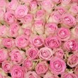 Pink roses in a group — Stock Photo #31305629