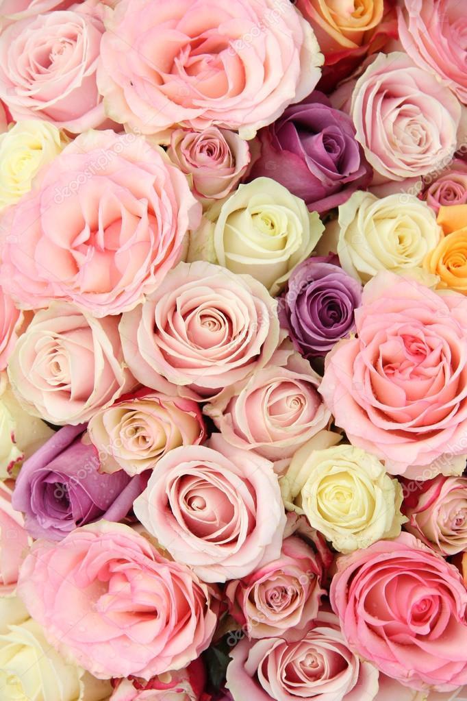 roses de mariage en couleurs pastel photographie portosabbia 31306173. Black Bedroom Furniture Sets. Home Design Ideas