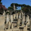 Old cemetery in the Provence — Stock Photo #32040407