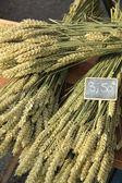 Wheat bouquets — Stock Photo