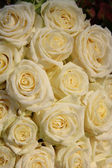 Group of frosted white roses — Stockfoto