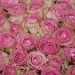 Sparkling pink roses — Stock Photo
