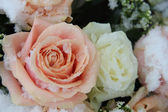Pink and white roses in the snow — Stockfoto