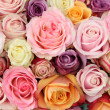 Wedding roses in pastel colors — Stockfoto