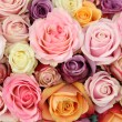 Wedding roses in pastel colors — 图库照片