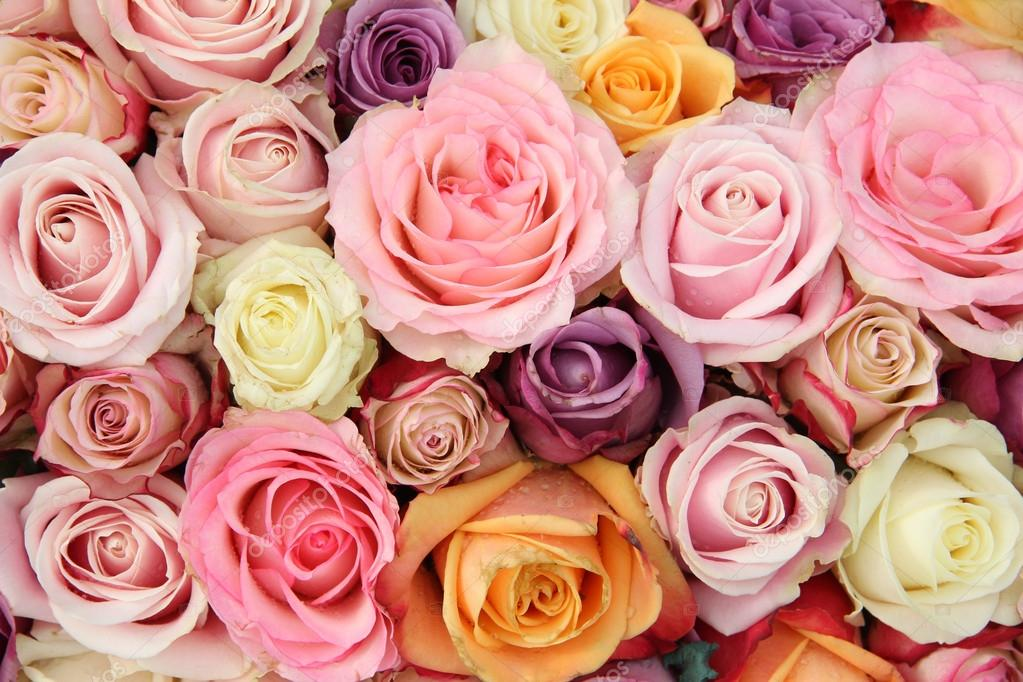 roses de mariage en couleurs pastel photo 32622709. Black Bedroom Furniture Sets. Home Design Ideas