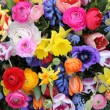 Spring flowers in bright colors — Stok fotoğraf