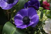 Anemones in bridal arrangement — Stock Photo