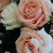 Pink and white roses in the snow — Stok fotoğraf