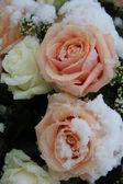 在雪中的粉红和白色玫瑰 — 图库照片
