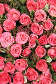 Group of Pink roses — Stock Photo