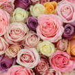 Pastel wedding roses — Stock fotografie