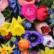 Mixed Spring Flowers — Stock Photo