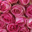 Big pink roses in a wedding centerpiece — ストック写真