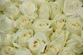 Group of white weddingflowers — Stock Photo