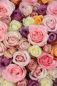 Pastel wedding roses — Stock Photo