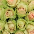 Pale pink roses in a wedding arrangement — Stock Photo #35553513