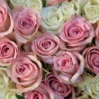 Stock Photo: Pink and white roses in a bridal arrangement