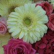 Yellow and pink bridal flowers — Stok fotoğraf