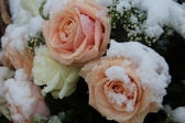 Pink and white roses in the snow — Stock Photo