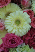 Yellow and pink bridal flowers — Stock Photo