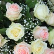 Pink and white roses — Stockfoto