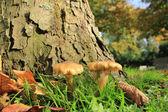 Mushrooms near a tree — Stock Photo
