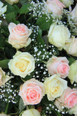 Pink and white roses — Stock Photo