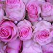Pink wedding roses — Stock Photo