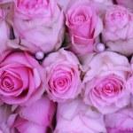 Pink wedding roses — Stock Photo