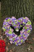 Hjärtformade sympati blommor — Stockfoto