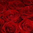 Wet red bridal roses — Stock Photo