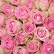 Pink roses in a group — Stock Photo #37766643