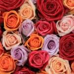 Mixed bridal roses — Stock Photo #37767899